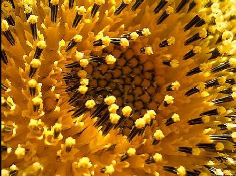 Pólen 230gr. - Flores do Zêzere